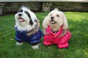 Dog Apparel For Small Dogs